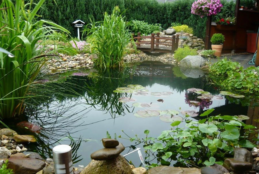 pflanzen f r den teich gartenblog geniesser garten pflanzen fuer den teich wassergarten. Black Bedroom Furniture Sets. Home Design Ideas