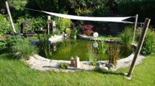 Teich mit for Spiegelkarpfen im gartenteich