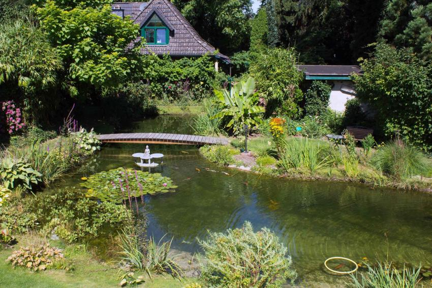 Teich wettbewerb v 7 for Gartenteich mit goldfischen